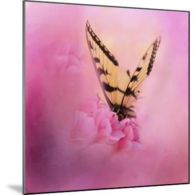 Butterfly on the Azaleas-Jai Johnson-Mounted Giclee Print