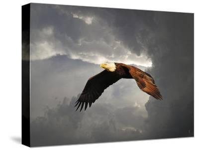Above the Storm Bald Eagle-Jai Johnson-Stretched Canvas Print