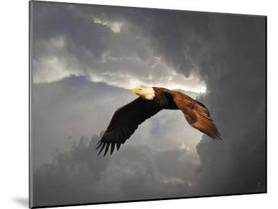 Above the Storm Bald Eagle-Jai Johnson-Mounted Giclee Print