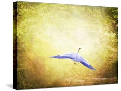 Blue Heron in the Light-Jai Johnson-Stretched Canvas Print