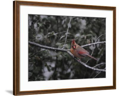 First Day of Snow-Jai Johnson-Framed Giclee Print