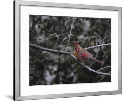 First Day of Snow-Jai Johnson-Framed Giclee Print