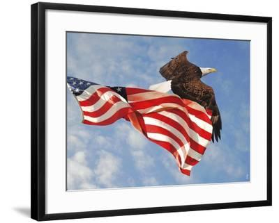 Flight of Freedom Bald Eagle-Jai Johnson-Framed Giclee Print