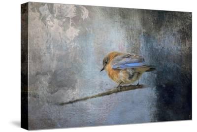 Bluebird in Winter-Jai Johnson-Stretched Canvas Print