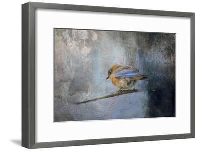 Bluebird in Winter-Jai Johnson-Framed Giclee Print