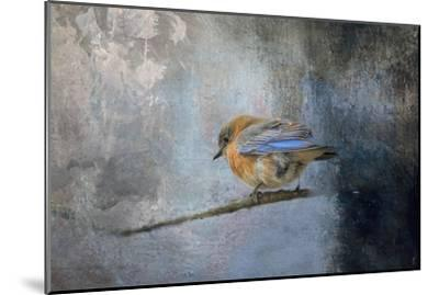 Bluebird in Winter-Jai Johnson-Mounted Giclee Print