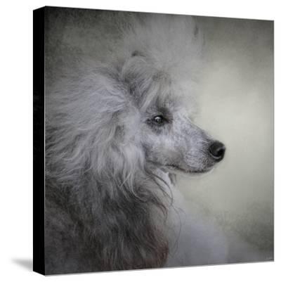 Longing Silver Standard Poodle-Jai Johnson-Stretched Canvas Print