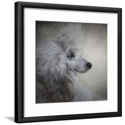 Longing Silver Standard Poodle-Jai Johnson-Framed Giclee Print
