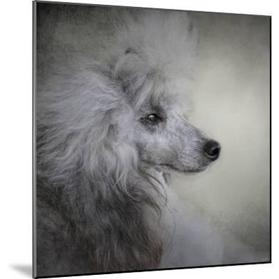 Longing Silver Standard Poodle-Jai Johnson-Mounted Giclee Print