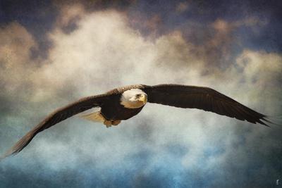 Coming Home Bald Eagle-Jai Johnson-Framed Giclee Print