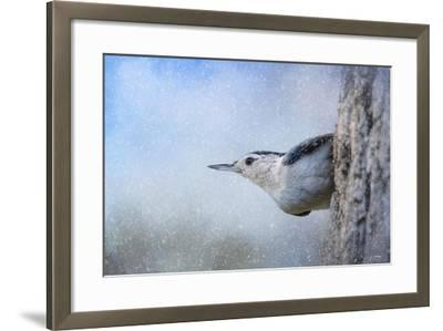 Nuthatch in the Snow-Jai Johnson-Framed Giclee Print