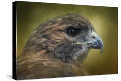 Red Tailed Hawk at Reelfoot-Jai Johnson-Stretched Canvas Print