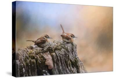 Two Little Wrens-Jai Johnson-Stretched Canvas Print