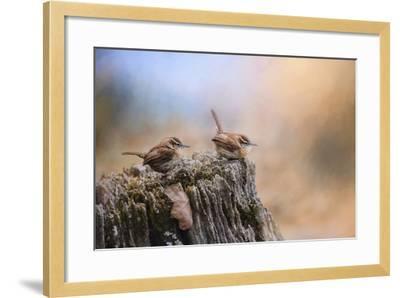 Two Little Wrens-Jai Johnson-Framed Giclee Print