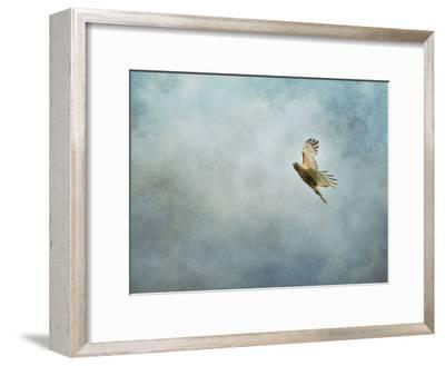 Up Up and Away Red Shouldered Hawk-Jai Johnson-Framed Giclee Print