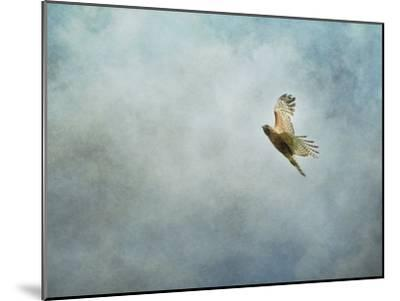 Up Up and Away Red Shouldered Hawk-Jai Johnson-Mounted Giclee Print