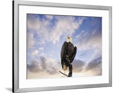 View from the Top Bald Eagle-Jai Johnson-Framed Giclee Print