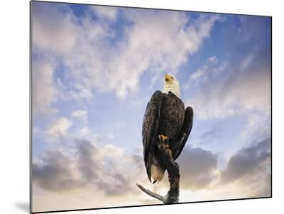 View from the Top Bald Eagle-Jai Johnson-Mounted Giclee Print