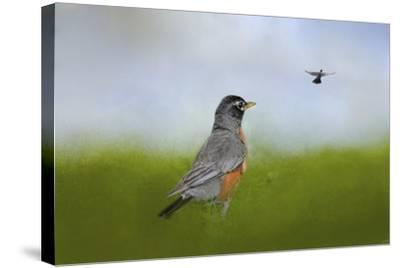 Robin in the Field-Jai Johnson-Stretched Canvas Print