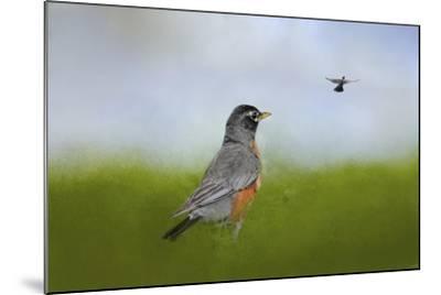 Robin in the Field-Jai Johnson-Mounted Giclee Print