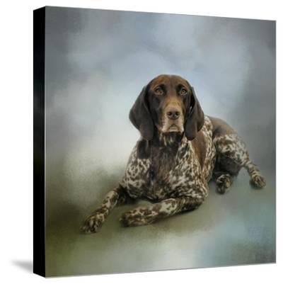 Waiting for a Cue German Shorthaired Pointer-Jai Johnson-Stretched Canvas Print