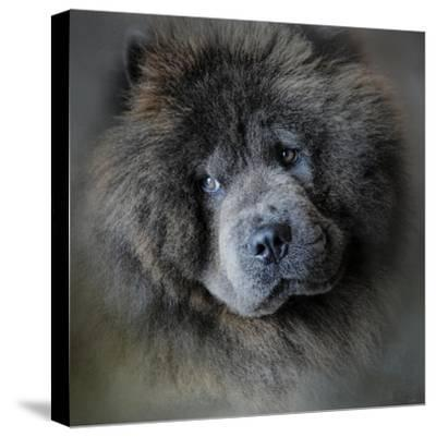Watching Master Blue Chow Chow-Jai Johnson-Stretched Canvas Print