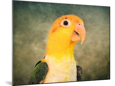 White Bellied Caique Portrait-Jai Johnson-Mounted Giclee Print