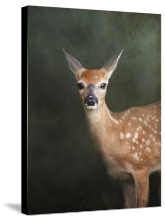 White Tailed Fawn Portrait-Jai Johnson-Stretched Canvas Print
