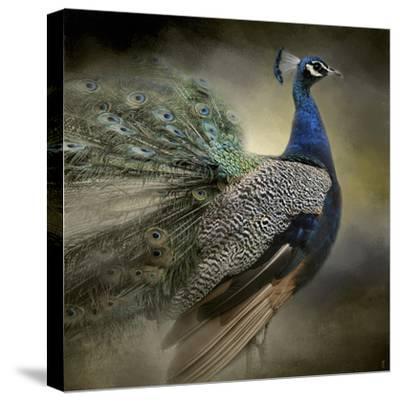 Peacock 5-Jai Johnson-Stretched Canvas Print