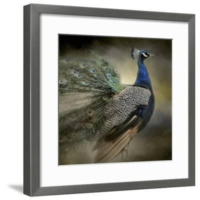 Peacock 5-Jai Johnson-Framed Giclee Print