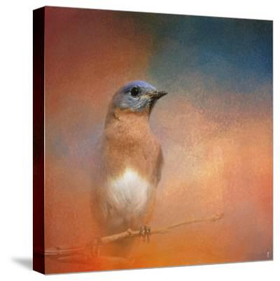 Summer Day Bluebird-Jai Johnson-Stretched Canvas Print