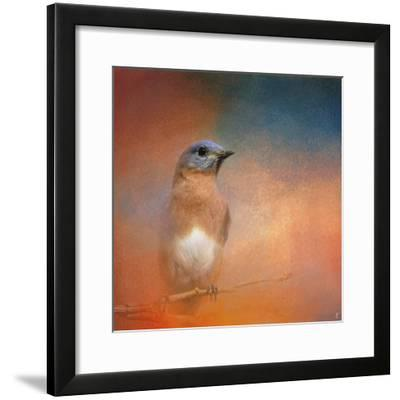 Summer Day Bluebird-Jai Johnson-Framed Giclee Print