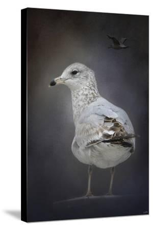 Perched Nearby Gull-Jai Johnson-Stretched Canvas Print