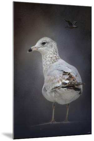 Perched Nearby Gull-Jai Johnson-Mounted Giclee Print