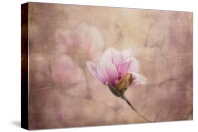Pink Magnolia 2-Jai Johnson-Stretched Canvas Print