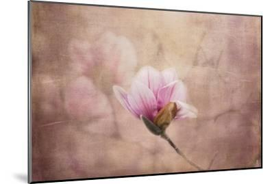 Pink Magnolia 2-Jai Johnson-Mounted Giclee Print