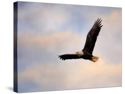 Pinson Mounds Eagle 1-Jai Johnson-Stretched Canvas Print