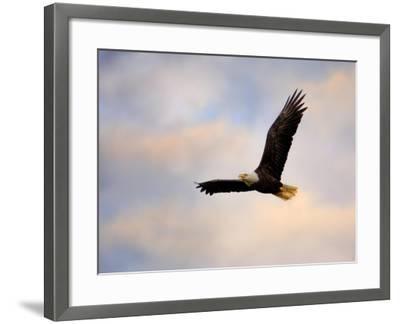 Pinson Mounds Eagle 1-Jai Johnson-Framed Giclee Print
