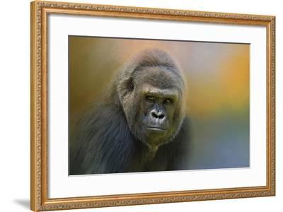 Portrait of a Gorilla-Jai Johnson-Framed Giclee Print