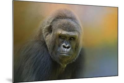 Portrait of a Gorilla-Jai Johnson-Mounted Giclee Print