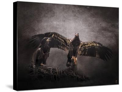 The Protector Juvenile Bald Eagles-Jai Johnson-Stretched Canvas Print