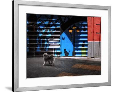 The Street Cats.-Juan Luis-Framed Photographic Print