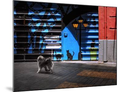 The Street Cats.-Juan Luis-Mounted Photographic Print