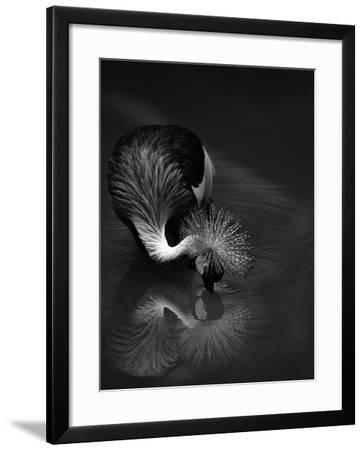 The Reflection- C.S.Tjandra-Framed Photographic Print