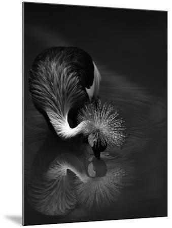 The Reflection- C.S.Tjandra-Mounted Photographic Print