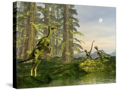 A Caudipteryx Watching Dilong Dinosaurs Approaching-Stocktrek Images-Stretched Canvas Print