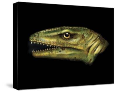Agnosphitys Portrait-Stocktrek Images-Stretched Canvas Print