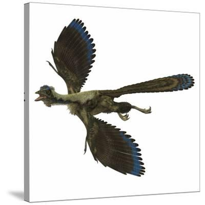 Archaeopteryx Prehistoric Bird-Stocktrek Images-Stretched Canvas Print