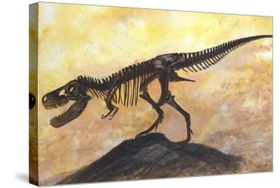 Tyrannosaurus Rex Dinosaur Skeleton-Stocktrek Images-Stretched Canvas Print