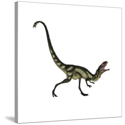 Dilong Dinosaur Roaring-Stocktrek Images-Stretched Canvas Print